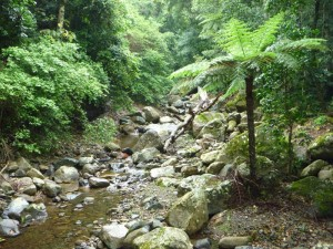 Minamurra Rainforest, NSW makes a lovely walk